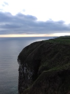 Bempton Cliffs April 2017