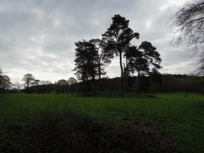Savernack Forest
